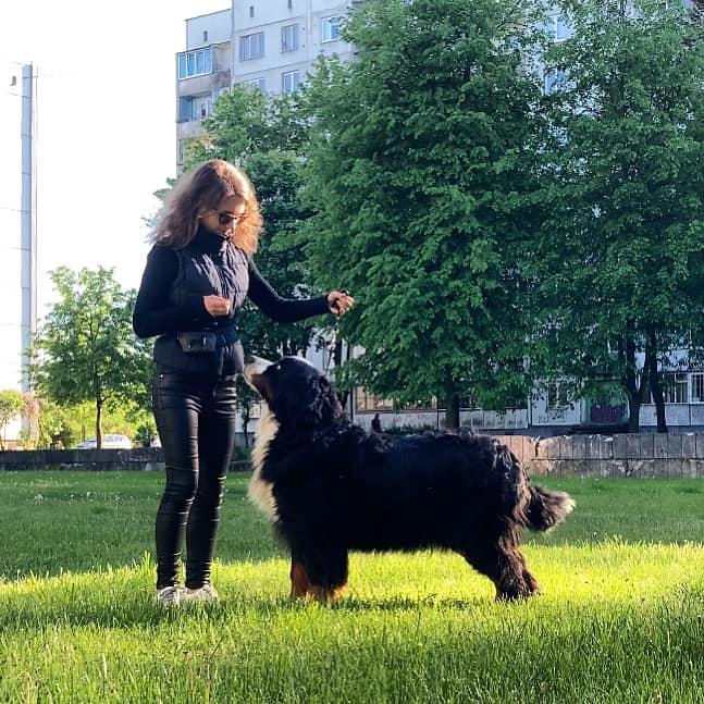 Kan være et bilde av hund og utendørs