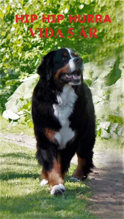 Kan være et bilde av 1 person, hund, utendørs og tekst som sier 'HIPHIP HIP HURRA VIDA 5 ?R'